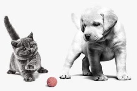 Alrefai Pet Shop